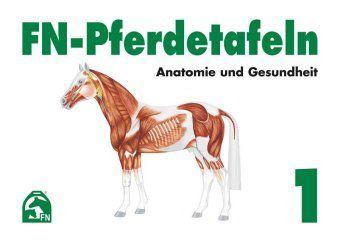 FN-Pferdetafeln: Mappe.1 Anatomie und Gesundheit