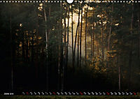 Forest collection (Wall Calendar 2019 DIN A3 Landscape) - Produktdetailbild 6