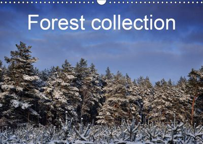 Forest collection (Wall Calendar 2019 DIN A3 Landscape), Marek Wasiel