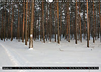 Forest collection (Wall Calendar 2019 DIN A3 Landscape) - Produktdetailbild 1
