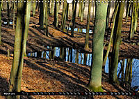 Forest collection (Wall Calendar 2019 DIN A3 Landscape) - Produktdetailbild 3