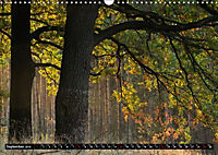 Forest collection (Wall Calendar 2019 DIN A3 Landscape) - Produktdetailbild 9