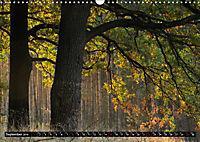 Forest collection (Wall Calendar 2019 DIN A3 Landscape) - Produktdetailbild 9