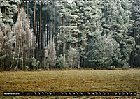 Forest collection (Wall Calendar 2019 DIN A3 Landscape) - Produktdetailbild 11