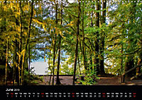 Forests photographed on four continents (Wall Calendar 2019 DIN A3 Landscape) - Produktdetailbild 6