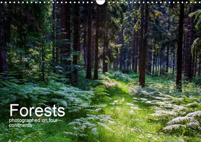 Forests photographed on four continents (Wall Calendar 2019 DIN A3 Landscape), Richard Walliser