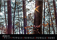 Forests photographed on four continents (Wall Calendar 2019 DIN A3 Landscape) - Produktdetailbild 1