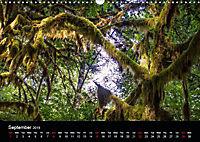 Forests photographed on four continents (Wall Calendar 2019 DIN A3 Landscape) - Produktdetailbild 9