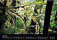 Forests photographed on four continents (Wall Calendar 2019 DIN A3 Landscape) - Produktdetailbild 7