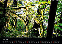 Forests photographed on four continents (Wall Calendar 2019 DIN A3 Landscape) - Produktdetailbild 7