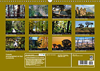 Forests photographed on four continents (Wall Calendar 2019 DIN A3 Landscape) - Produktdetailbild 13