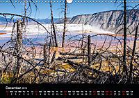 Forests photographed on four continents (Wall Calendar 2019 DIN A3 Landscape) - Produktdetailbild 12