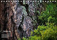 Formen und Strukturen der Natur (Tischkalender 2019 DIN A5 quer) - Produktdetailbild 2