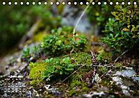 Formen und Strukturen der Natur (Tischkalender 2019 DIN A5 quer) - Produktdetailbild 6