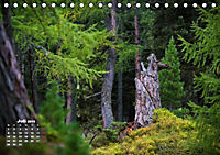 Formen und Strukturen der Natur (Tischkalender 2019 DIN A5 quer) - Produktdetailbild 7
