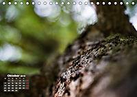 Formen und Strukturen der Natur (Tischkalender 2019 DIN A5 quer) - Produktdetailbild 10