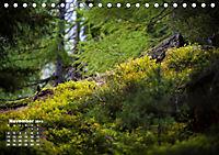 Formen und Strukturen der Natur (Tischkalender 2019 DIN A5 quer) - Produktdetailbild 11