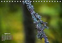 Formen und Strukturen der Natur (Tischkalender 2019 DIN A5 quer) - Produktdetailbild 4