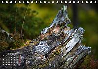 Formen und Strukturen der Natur (Tischkalender 2019 DIN A5 quer) - Produktdetailbild 5