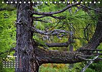 Formen und Strukturen der Natur (Tischkalender 2019 DIN A5 quer) - Produktdetailbild 3