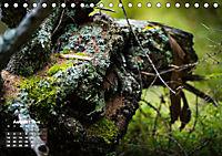 Formen und Strukturen der Natur (Tischkalender 2019 DIN A5 quer) - Produktdetailbild 8