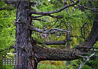 Formen und Strukturen der Natur (Wandkalender 2019 DIN A2 quer) - Produktdetailbild 3