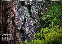 Formen und Strukturen der Natur (Wandkalender 2019 DIN A2 quer) - Produktdetailbild 2