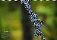 Formen und Strukturen der Natur (Wandkalender 2019 DIN A2 quer) - Produktdetailbild 4