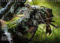 Formen und Strukturen der Natur (Wandkalender 2019 DIN A4 quer) - Produktdetailbild 8