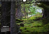 Formen und Strukturen der Natur (Wandkalender 2019 DIN A4 quer) - Produktdetailbild 1