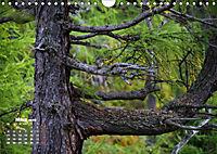 Formen und Strukturen der Natur (Wandkalender 2019 DIN A4 quer) - Produktdetailbild 3
