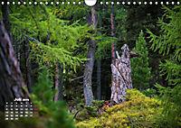 Formen und Strukturen der Natur (Wandkalender 2019 DIN A4 quer) - Produktdetailbild 7