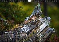 Formen und Strukturen der Natur (Wandkalender 2019 DIN A4 quer) - Produktdetailbild 5