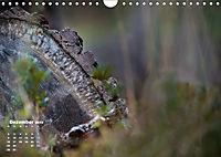 Formen und Strukturen der Natur (Wandkalender 2019 DIN A4 quer) - Produktdetailbild 12