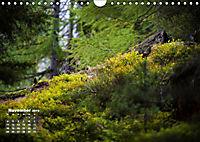 Formen und Strukturen der Natur (Wandkalender 2019 DIN A4 quer) - Produktdetailbild 11