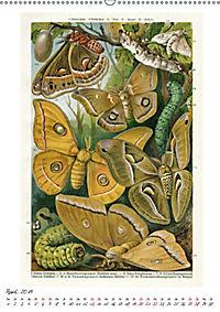Formenspiele der Evolution. Chromolithographien des 19. Jahrhunderts (Wandkalender 2019 DIN A2 hoch) - Produktdetailbild 1