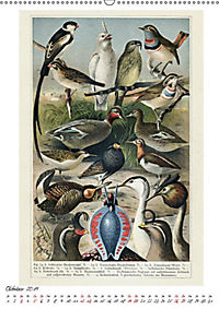 Formenspiele der Evolution. Chromolithographien des 19. Jahrhunderts (Wandkalender 2019 DIN A2 hoch) - Produktdetailbild 9