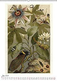 Formenspiele der Evolution. Chromolithographien des 19. Jahrhunderts (Wandkalender 2019 DIN A2 hoch) - Produktdetailbild 2
