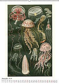Formenspiele der Evolution. Chromolithographien des 19. Jahrhunderts (Wandkalender 2019 DIN A2 hoch) - Produktdetailbild 3