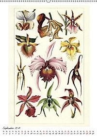 Formenspiele der Evolution. Chromolithographien des 19. Jahrhunderts (Wandkalender 2019 DIN A2 hoch) - Produktdetailbild 6