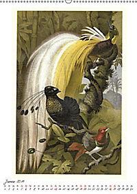 Formenspiele der Evolution. Chromolithographien des 19. Jahrhunderts (Wandkalender 2019 DIN A2 hoch) - Produktdetailbild 4