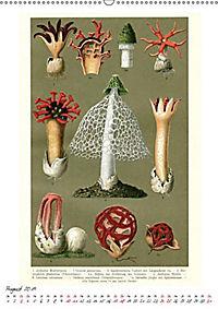 Formenspiele der Evolution. Chromolithographien des 19. Jahrhunderts (Wandkalender 2019 DIN A2 hoch) - Produktdetailbild 5