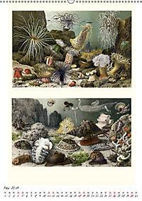 Formenspiele der Evolution. Chromolithographien des 19. Jahrhunderts (Wandkalender 2019 DIN A2 hoch) - Produktdetailbild 11