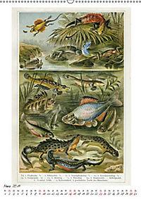 Formenspiele der Evolution. Chromolithographien des 19. Jahrhunderts (Wandkalender 2019 DIN A2 hoch) - Produktdetailbild 8