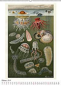 Formenspiele der Evolution. Chromolithographien des 19. Jahrhunderts (Wandkalender 2019 DIN A2 hoch) - Produktdetailbild 13