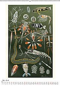 Formenspiele der Evolution. Chromolithographien des 19. Jahrhunderts (Wandkalender 2019 DIN A2 hoch) - Produktdetailbild 7