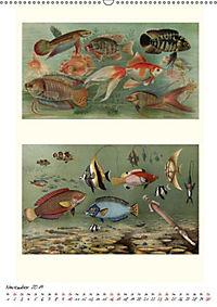 Formenspiele der Evolution. Chromolithographien des 19. Jahrhunderts (Wandkalender 2019 DIN A2 hoch) - Produktdetailbild 10