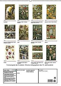 Formenspiele der Evolution. Chromolithographien des 19. Jahrhunderts (Wandkalender 2019 DIN A2 hoch) - Produktdetailbild 12