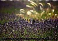 Frankreich - die Provence (Wandkalender 2019 DIN A2 quer) - Produktdetailbild 9