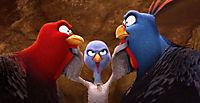 Free Birds - Produktdetailbild 9